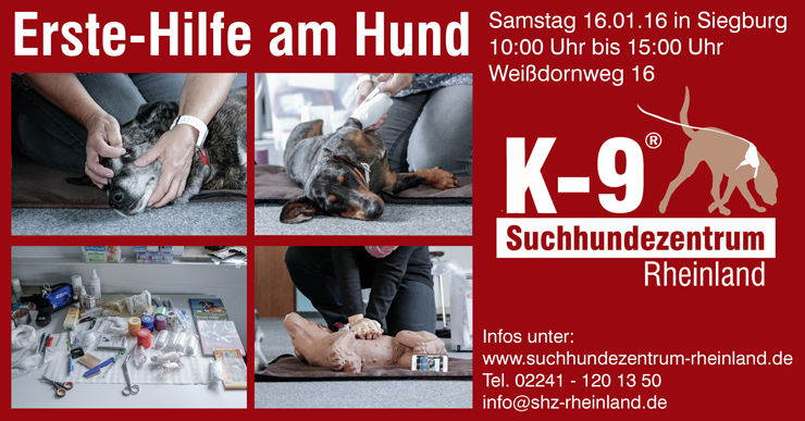 EHHUND CARD 160116