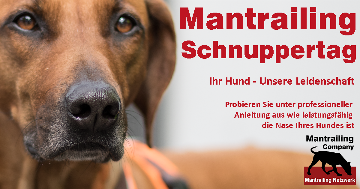 Schnuppertraining Mantrailing (Velbert/Neviges)